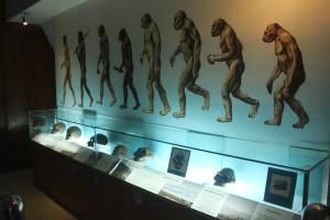 サンギラン・ジャワ原人博物館