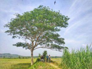 ジョグジャ サイクリングツアー